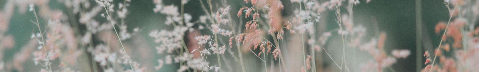 Hochwertige ganz Jahres Bettwäsche fleuresse