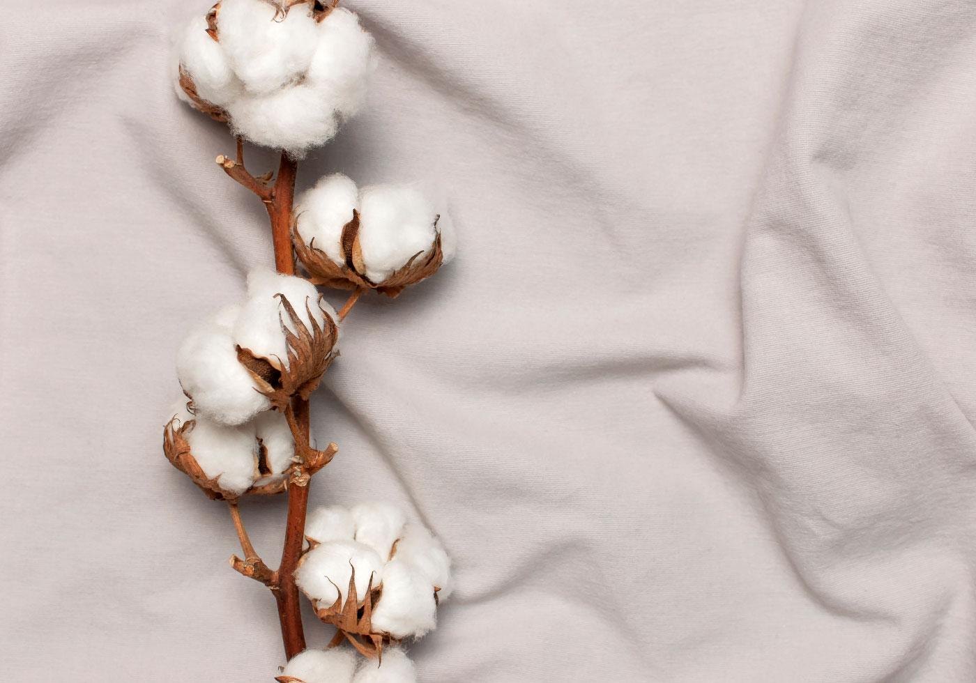 Baumwollpflanze auf Beigem Markenbezug