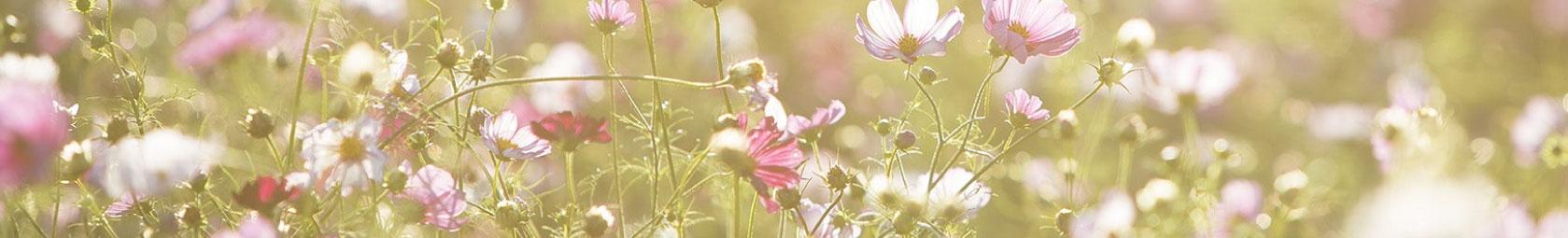 fleuresse Sommer Bettwäsche