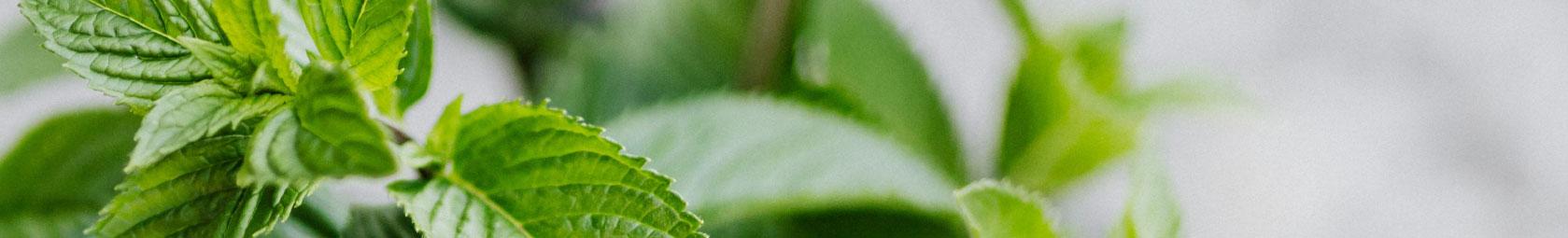 Grüne Pflanzen